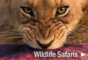 Big 5 African Wildlife Safaris. Encounter Lions, Leopards, Buffalo, Elephant & so much more...
